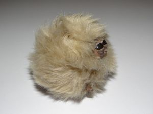 brown pygmy puff